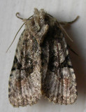 moth-04-08-2008-3.jpg
