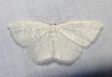 moth-08-06-2008-4.jpg