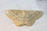 moth-08-06-2008-7.jpg