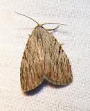 moth-08-06-2008-9.jpg