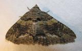 moth-08-06-2008-14.jpg