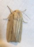 moth-08-06-2008-16.jpg