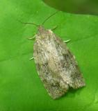 moth-10-06-2008-2.jpg