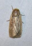 moth-21-06-2008-4.jpg