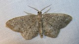 moth-21-06-2008-6.jpg