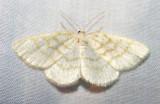 moth-21-06-2008-21.jpg