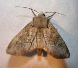 moth-21-06-2008-22.jpg