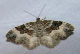 moth-21-06-2008-23.jpg