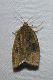 moth-21-06-2008-26.jpg