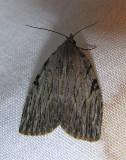 moth-21-06-2008-28.jpg