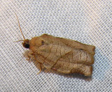 moth-21-06-2008-30.jpg