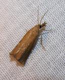 moth-21-06-2008-31.jpg