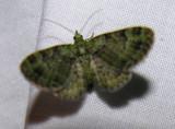 moth-21-06-2008-32.jpg