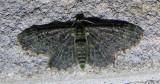 moth-22-06-2008-2.jpg