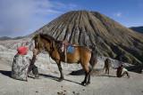 Horse rental to Bromo