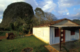 A house and a Mogote