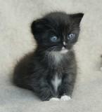 Kittens Week 3