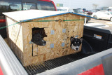 EVERY WHERE YOU LOOK IN ALASKA THERE ARE RACING DOGS