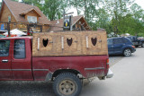 YOU SEE TRUCKS EVERYWHERE BUILT TO TRANSPORT SLED DOGS