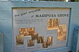 Tour of Mariposa Grove's Sequoias