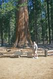 Rick & the Sequoia