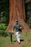 Stephen dwarfed by the Sequoias