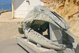 Skull of the California Gray Whale