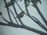 060310 b Handsome sunbird Camp1 Hamut.JPG