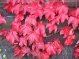Autumn 2009