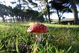 My new fungusset
