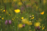 meadow up close