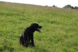 holly in the meadow