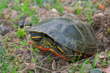 Turtles are busy
