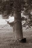 Deer & cat meeting 2