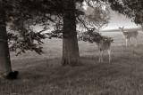 Deer & cat meeting 1