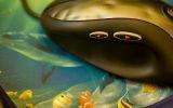 Ocean Mouse