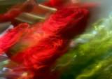 Magic Rosegarden
