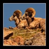 Mountain Top Gossip