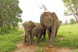 Udawalawe Wildlife Sanctuary:  November 2004