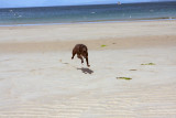 Gigha in flight