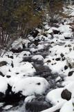 Along the trail from Bear Lake to Alberta Falls