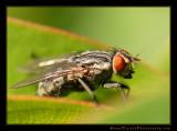 fly01_5146.jpg