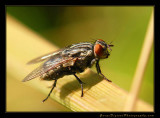 fly02_5166.jpg