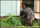 jetty_cat01_0106.jpg