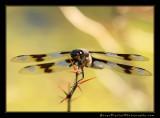dragon_fly01_5063.jpg