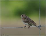1183 Vesper Sparrow.jpg