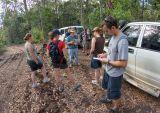 Botanizing in rainforest-invaded forest. _DSC5399