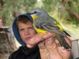 bird (Lara Fine)