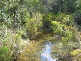 Creek in tall open forest (Lara Fine)
