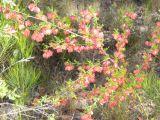 A common endangered plant (Lara Fine)